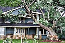 Tree_Fallen_on_House